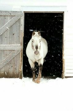 Winter day in the country… white - barn, horse, snow!