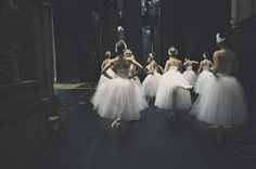 Swans | Photography by Lar Rattray (5)