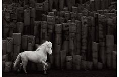 """Noble Light"" is from the limited edition equestrian print series In the Realm of Legends⁠ taken in Iceland by photographer and filmmaker Drew Doggett Legend Drawing, Icelandic Horse, Foto Instagram, Instagram White, Mundo Animal, Photography Branding, Horse Photography, Photography Series, Horse Pictures"