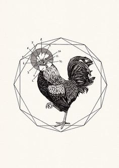 Rooster by Peter Carrington, via Flickr