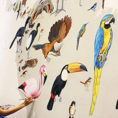 Scientific Illustrator Paints Giant Murals Featuring 243 Bird Families  Scientific illustrator Jane Kim (of Ink Dwell) spent around 16 months to paint birds of 243 different species on a wall. Everything began during her internship at the Cornell Lab of Ornithology when her director proposed her the frescos project. To make everything more impressive she enlarged the size of each bird and even represented 26 extinct species such as the dodo. We also find parrots budgies smaller birds like…