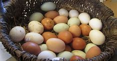 Fun facts about eggs (that might not be true) Part One Healthy Fats, Healthy Choices, Easter Egger Chicken, Eggs In A Basket, Brown Eggs, Garden Animals, Extreme Diet, Chickens Backyard, Earth