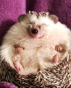 Home Decor Cozy Mealworms are the best yummy in my tummy! - Baby - Decor Cozy Mealworms are the best yummy in my tummy! Cute Little Animals, Cute Funny Animals, Baby Hedgehog, Cute Creatures, Animals Beautiful, Pet Birds, Mammals, Animals And Pets, Animal Pictures
