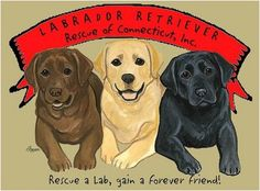 Labrador Retriever Rescue of CT