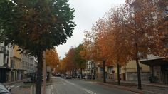 Corso Langhe nel Alba, Piemonte