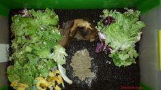 Kompostwürmer lieben ihre Ruhe