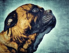 "Check out new work on my @Behance portfolio: ""Portrait of a dog"" http://be.net/gallery/50124553/Portrait-of-a-dog"