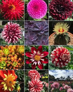 Hard to pick a favorite screenshot, but every time I scroll through my gallery, I always stop to take a look at these dahlias (my favorite flowers, aside from peonies and tulips) from the Conservatory of Flowers. At least there are a couple succulents and a cactus in the screenshot! Fun hashtag, @sacredelements! And thanks @rileys_oasis for tagging me.  #mygalleryshot
