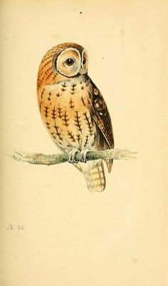 n212_w1150 by BioDivLibrary, via Flickr