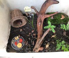 African Snail, Giant African Land Snails, Snail Life Cycle, Snails In Garden, Garden Snail, Snail Facts, Giant Snail, Hungry Caterpillar Activities, Pet Snails