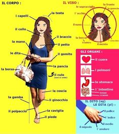 Learn how to call your body parts in Italian. All parts of the face and body in one image. Find even more language lessons on Lesson of Italia.