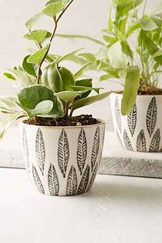 Magical Thinking Feather Planter