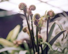 Freunde von Freunden — Azuma Makoto — Flower Artist, Store, Minami Aoyama, Tokyo — http://www.freundevonfreunden.com/workplaces/azuma-makoto/