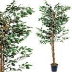 Tuin Műnövény - Fikusz 160 cm Plants, Plant, Planets