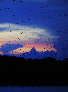 Fruit bats Komodo Island