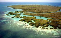 Australia - Queensland - Daintree National Park