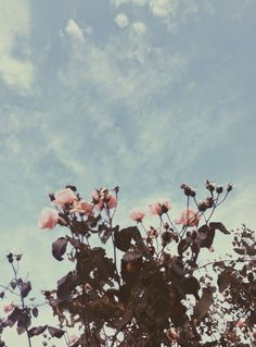 Find images and videos about aesthetic, flowers and rose on We Heart It - the app to get lost in what you love. Flower Aesthetic, Pretty Pictures, Aesthetic Wallpapers, Planting Flowers, Beautiful Flowers, Images, Inspiration, Photography Flowers, Fashion Photography
