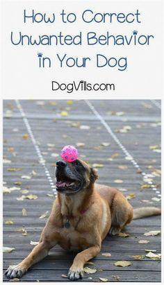 Dog Training Dominance Dog Training Portland Dog Training