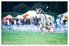 Dog Chow Disc Cup 2014 Poznań