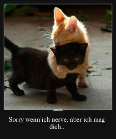 Sorry wenn ich nerve, aber ich mag dich.. | Lustige Bilder, Sprüche, Witze, echt lustig