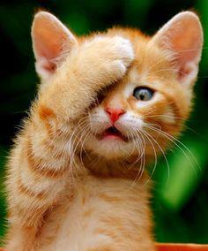 Cat ginger beside herself after Kap throws an interception...
