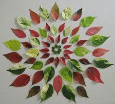 "Leaf ""burst"" Flower Rangoli, Flower Mandala, Mandala Art, Land Art, Elefante Hindu, Nature Collage, Organic Art, Pressed Flower Art, Environmental Art"