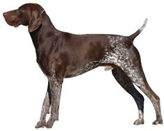 Kenny & I are thinking about getting German Shorthaired Pointer for a pet and hunting dog. Anyone have a GPS ?