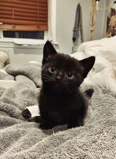 Cute Baby Cats, Cute Little Animals, Cute Cats And Kittens, Cute Funny Animals, I Love Cats, Crazy Cats, Kittens Cutest, Pretty Cats, Beautiful Cats