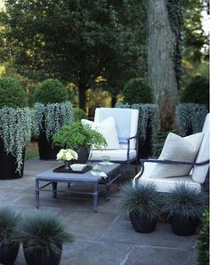 Tall planters for privacy on a patio. Looks like trailing dusty miller hanging from the tall pots, 'Elijah Blue' grass in the low pots. Outdoor Rooms, Outdoor Gardens, Outdoor Living, Outdoor Furniture Sets, Outdoor Decor, Outdoor Seating, Outdoor Patios, Outdoor Kitchens, Outdoor Cushions