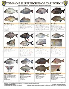 1000 images about fish identification on pinterest fish for California freshwater fish