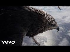 Clip, Music Is Life, Bald Eagle, Migration, Music Videos, Ghosts, Crossover, Feathers, Youtube