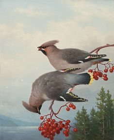 Waxwings by Ferdinand von Wright, 1888 Scandinavian Paintings, Wright Brothers, Ferdinand, Bird Art, Dog Treats, Pet Birds, Vintage Art, Coloring Pages, Sculptures
