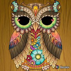 Beautiful Owl Art