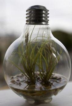 7 Delightful Mini-Indoor Garden Ideas to Liven Up Your Living Space - DIY…