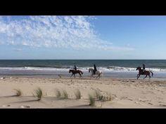 Aventuras a caballo en la playa de Matalascañas - YouTube