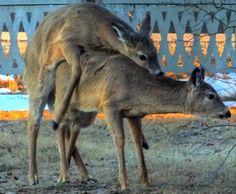 Nature's Way Kangaroo, Outdoors, Nature, Travel, Animals, Baby Bjorn, Naturaleza, Viajes, Animales