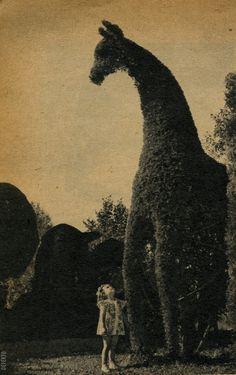 Vintage Giraffe topiary