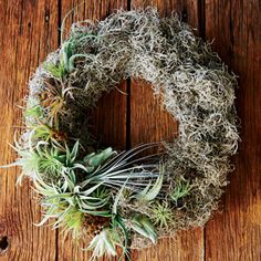 tillandsias displayed in a mossy wreath