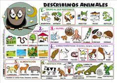 Describir animales - Actiludis (varios formatos)