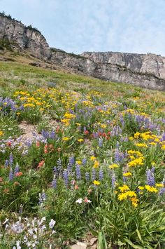 Wildflowers Galore, Summer's Finale,  Montana Wildflowers, Apliine Flowers, Greeting Card on Etsy, $3.75