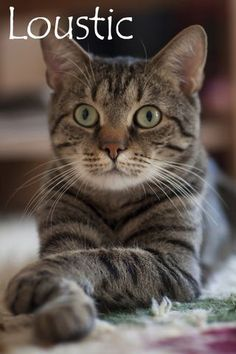 Chat Male, Nom Nom, Cats, Animals, Beautiful Cats, Gatos, Animales, Kitty Cats, Animaux