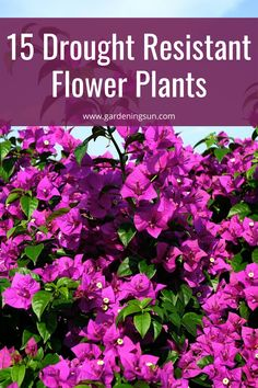 Flower Plants, Flowers Perennials, Planting Flowers, Growing Vegetables From Seeds, Growing Seeds, Gardening For Beginners, Gardening Tips, Portulaca Grandiflora, Bee Hive Plans