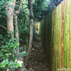 #Bambú #Infinito  #cerco de #cañas de #bambú larguísimo que hicimos hoy
