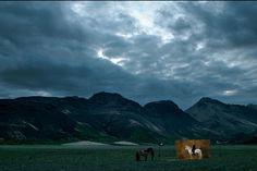 YannArthusBertrand2.org - Fond d écran gratuit à télécharger || Download free wallpaper - Cheval islandais The Royal Show, Arthus Bertrand, Welsh Pony, Akhal Teke, American Quarter Horse, Icelandic Horse, Andalusian Horse, Horse Pictures, Show Horses