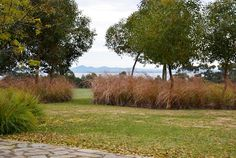 Fiona Brockoff - Coast & Country Landscape Design. Using Australian Native Grasses as a hedge.