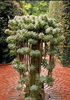 succulent planter (graptopetalum paraguayense in it? Amazing Gardens, Hanging Plants, Plants, Succulents, Succulent Terrarium, Tall Planters, Succulent Landscaping, Ghost Plant, Succulent Planter