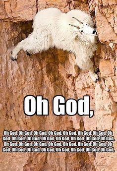 This is actually pretty impressive. You go, mountain goat.