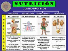 Esquema función de nutrición