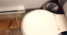 Mom Films Her Naughty Cat Sniffing The Toilet  Until He Decides To Jump Into The Garbage - http://instaviral.pw/funny/mom-films-her-naughty-cat-sniffing-the-toilet-until-he-decides-to-jump-into-the-garbage/