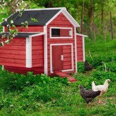 blandade kycklingar dating bästa sättet att annonsera en dejtingsajt